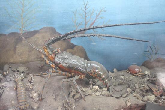 Museu de História Natural caranguejo