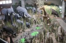 museu-de-historia-natural-elefantes-girafas