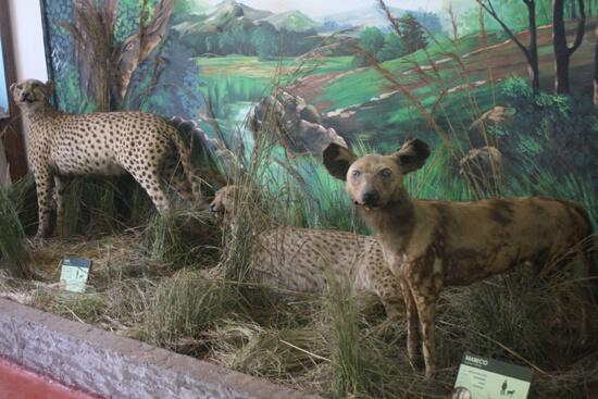 Museu de História Natural crocs
