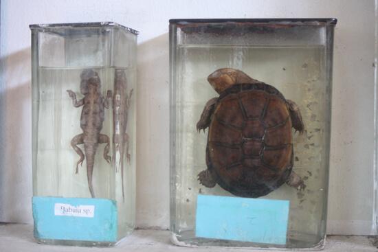 Museu de História Natural cagado