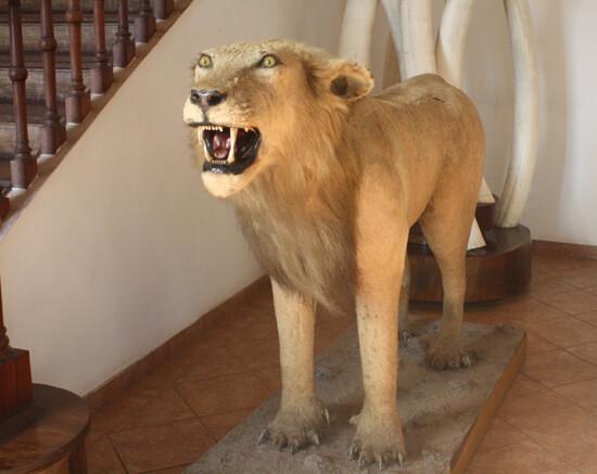 Museu de História Natural leao