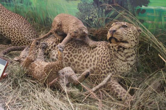 Visão do Museu de História Natural