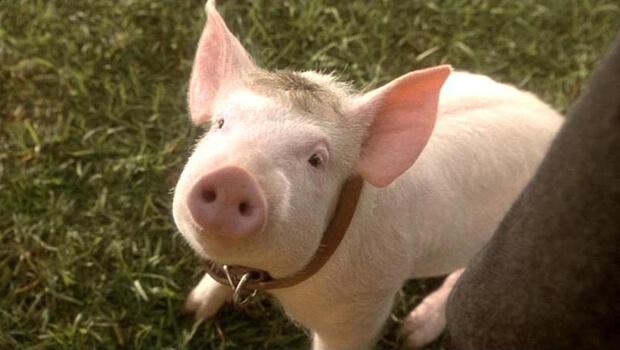 Porco em changana