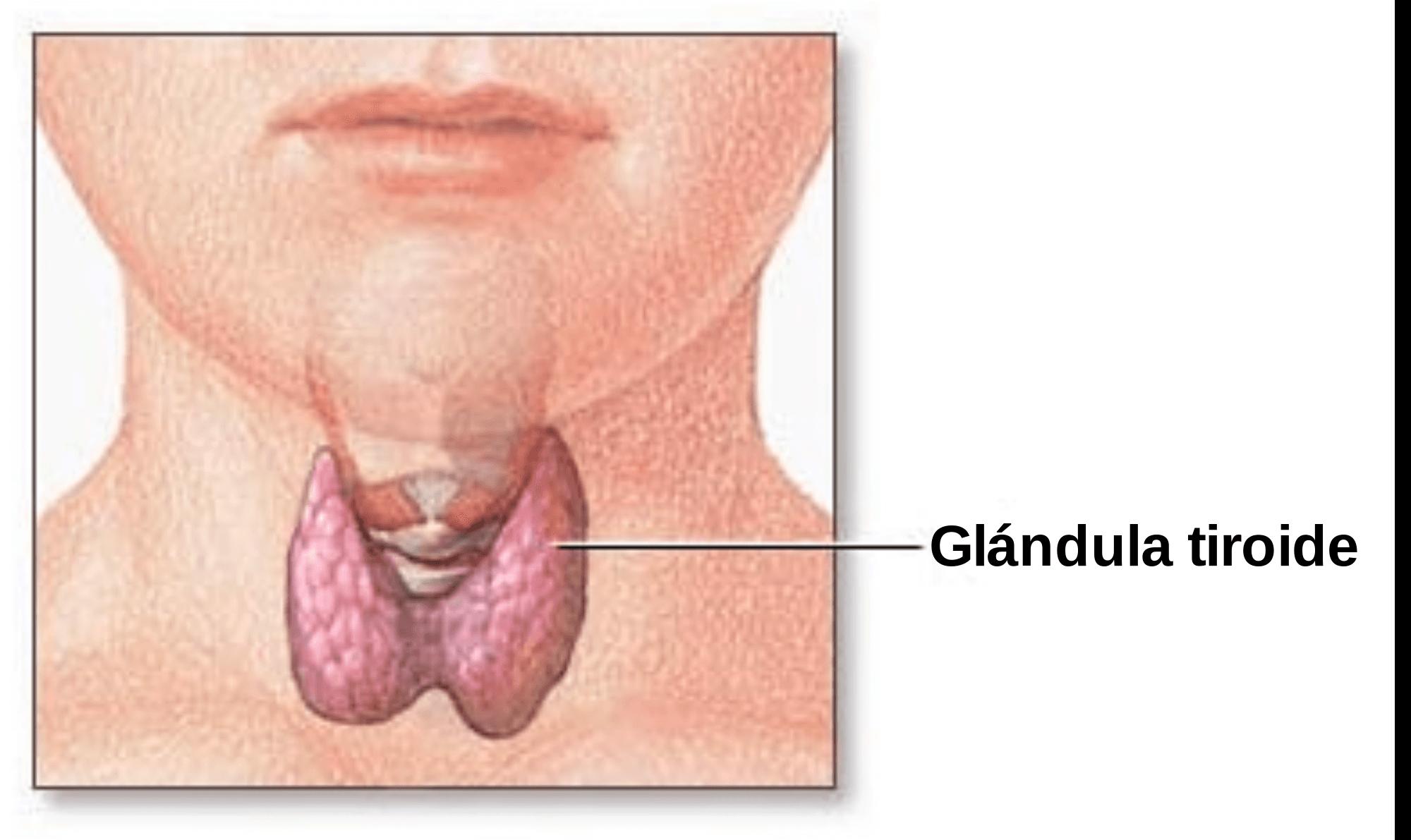 Glandula da tiroide
