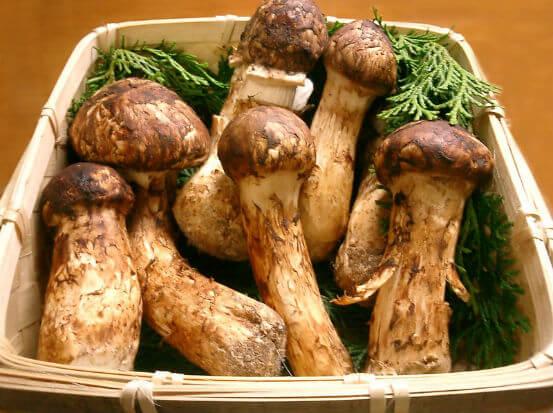 Cogumelos Matsutake