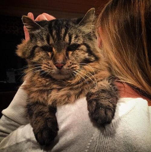 gato-mais-velho-5