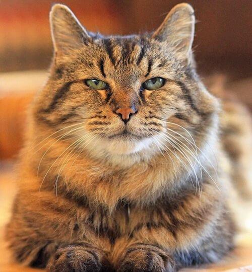 gato-mais-velho.2