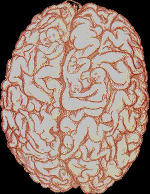 Sexo cerebro